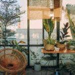 plantes intérieures dans pièce en verre