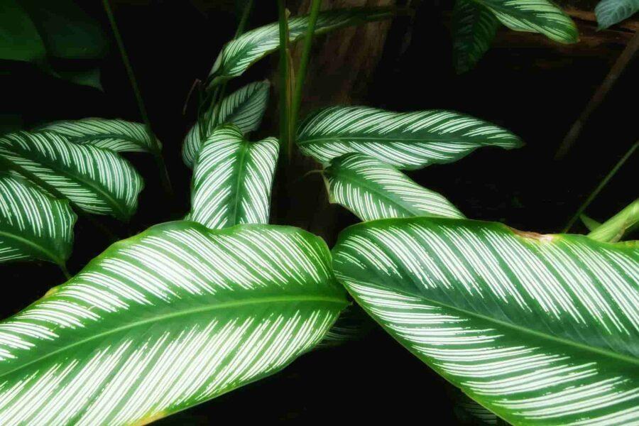 plantes d'intérieur déco maison